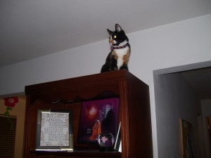 ill never tell you how i got up here