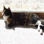 Tiara sunbathing